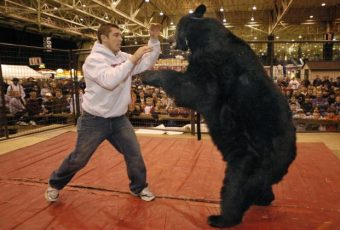 Alabama Bear Wrestling