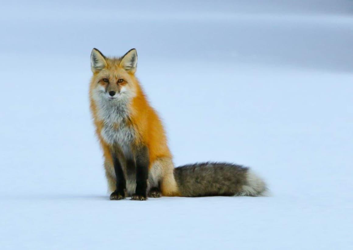 Wildlife In Colorado